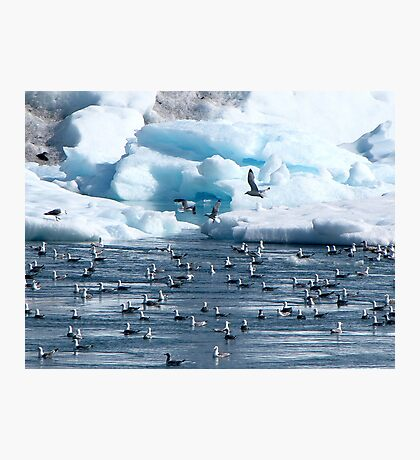 Cold weather is for the BIRDS! Photographic Print