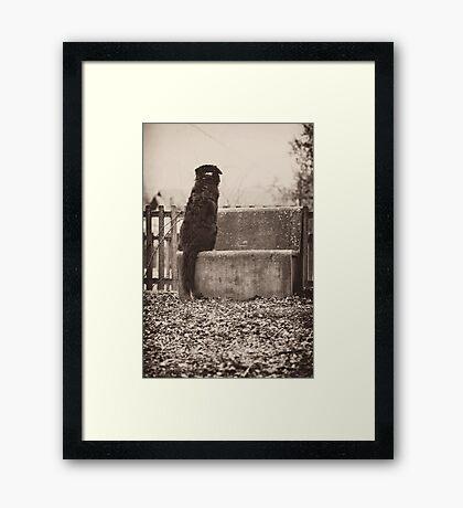 Monkey Tail Framed Print