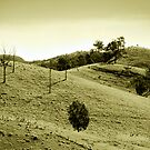 Foothills of Mt Mee by Tony Steinberg