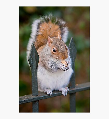 Squirrel of Hyde Park Photographic Print