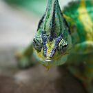 Chameleon by Andre Gascoigne