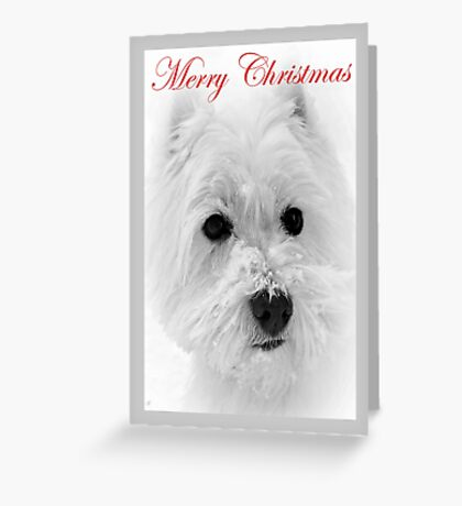 Scottish Terrier Christmas Card. Greeting Card