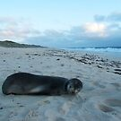Seal - City Perth, Perth, 10th August, 2015 by Robert Phillips