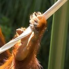 Holding On - Orang-utan Series by Rosemaree