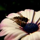 bee in a flower. by Mr. Sherman