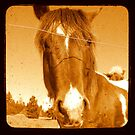 A horse by Mr. Sherman