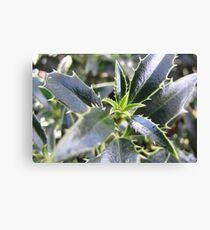 New holly leaves for Christmas Canvas Print