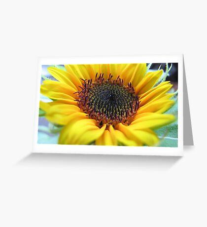 Sunflower in full bloom Greeting Card
