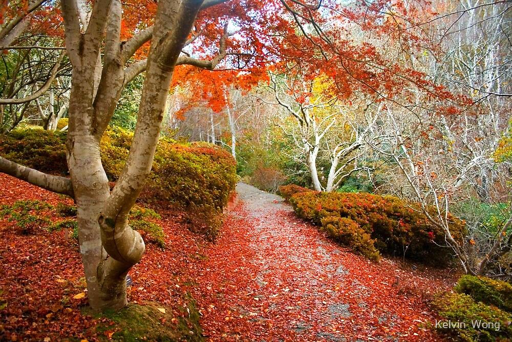 Autumn At Mount Lofty Botanic Garden By Kelvin Wong