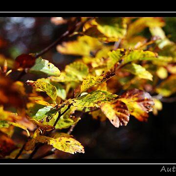 Fall Time by danielgre