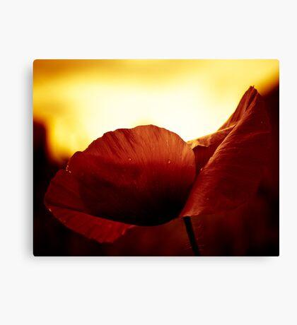 Golden Glow Poppie Canvas Print