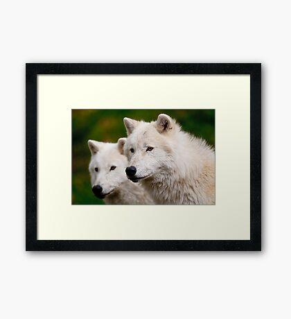 Arctic Wolf Pair Framed Print