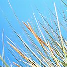 Marram Grass by Ian Lyall