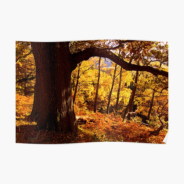 Autumn colours near Ullswater - The Lake District Poster