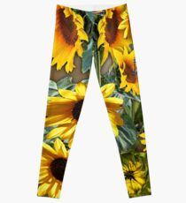 Yellow Sunflowers for Wisdom, Harmony   Leggings