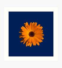Orange power flower Art Print