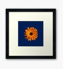 Orange power flower Framed Print