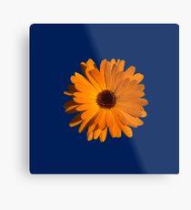 Orange power flower Metal Print