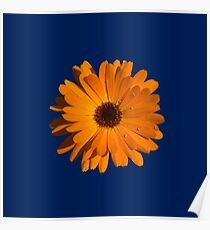 Orange power flower Poster