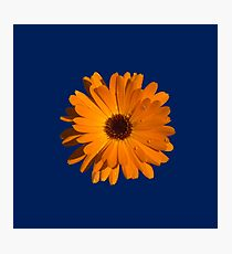 Orange power flower Photographic Print