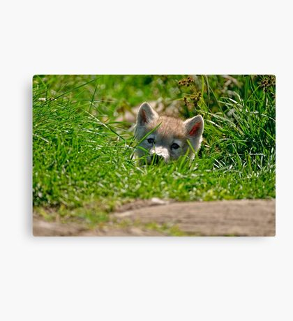 Who Me?? Arctic Wolf Pup Canvas Print