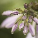 After The Rain by Kelly Chiara