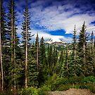 Mt Rainier Landscape by Jonicool