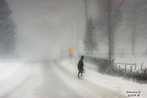 Headed Home:20 inches and Still Coming Down by canonman99