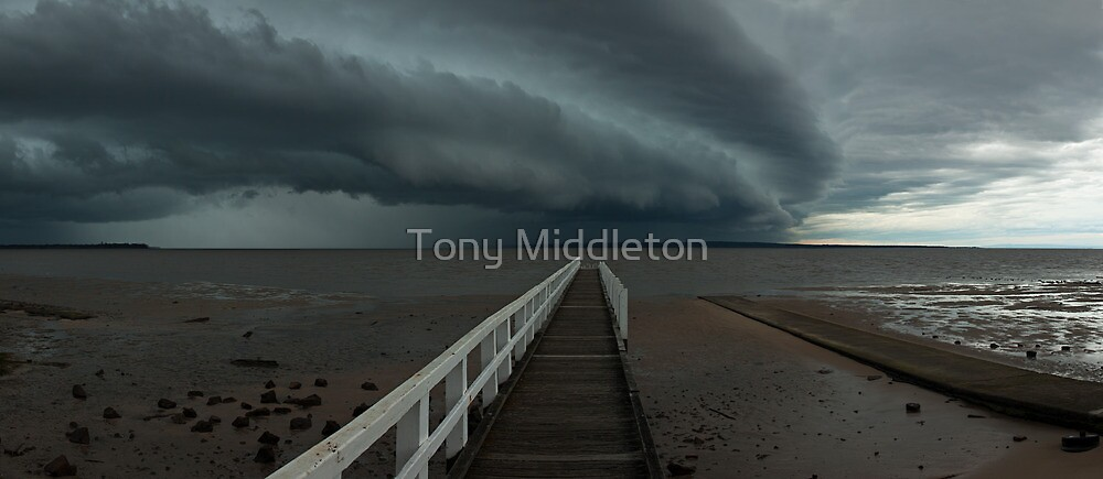 Walk on the wild side... by Tony Middleton