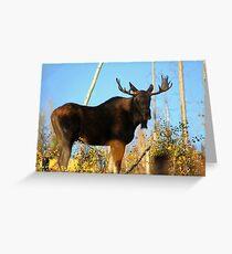 Fall Bull Moose  Greeting Card