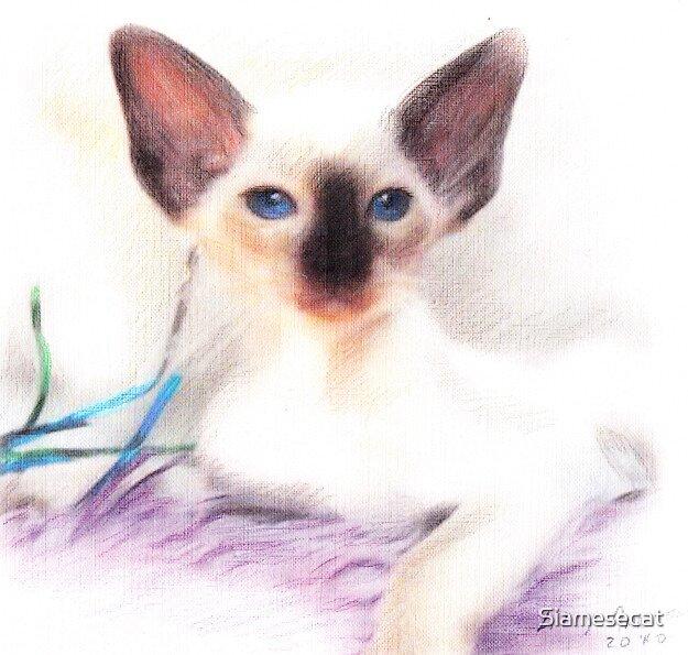 Chocolate Point Kitten. by Siamesecat