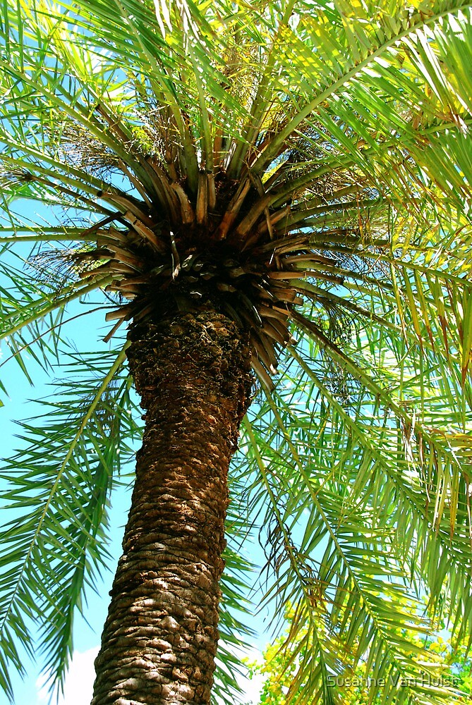 Pretty Palm View by Susanne Van Hulst