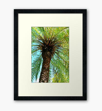 Pretty Palm View Framed Print