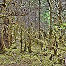 Rain Forest Juneau, Alaska by Lanis Rossi