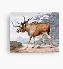 Bull Moose Vintage Drawing Canvas Print