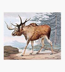 Bull Moose Vintage Drawing Photographic Print