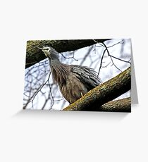 """Blue Heron ..."" Greeting Card"