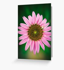Cone Flower in the garden Greeting Card