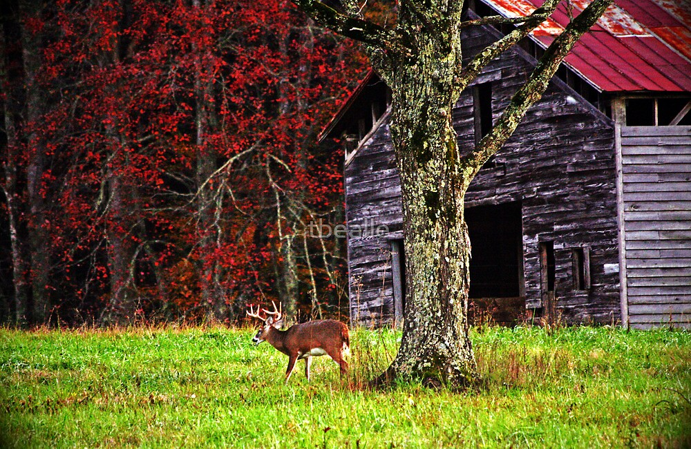 Buck by Ole Barn by Terri~Lynn Bealle