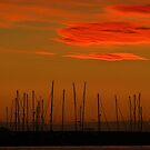 Under a Blood Red Sky by frankc