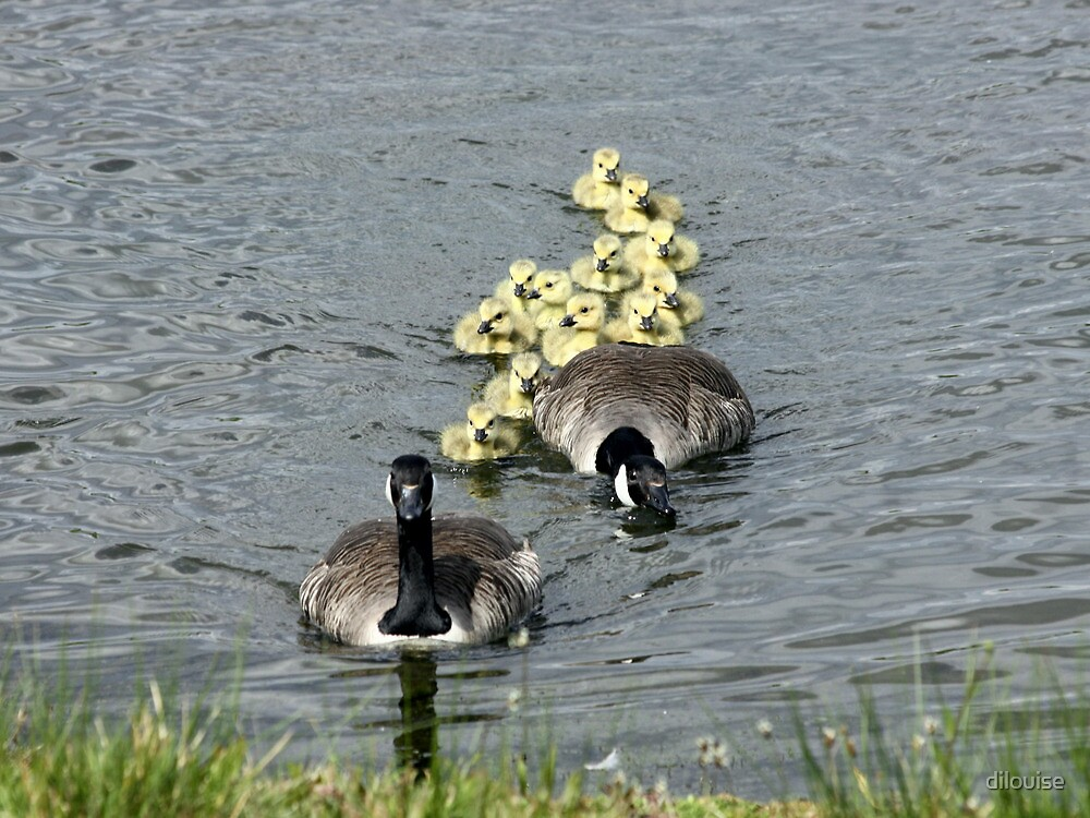 Family Outing! by dilouise
