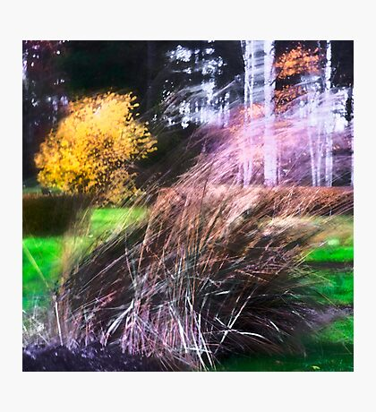 Autumn Storm in the Garden Photographic Print
