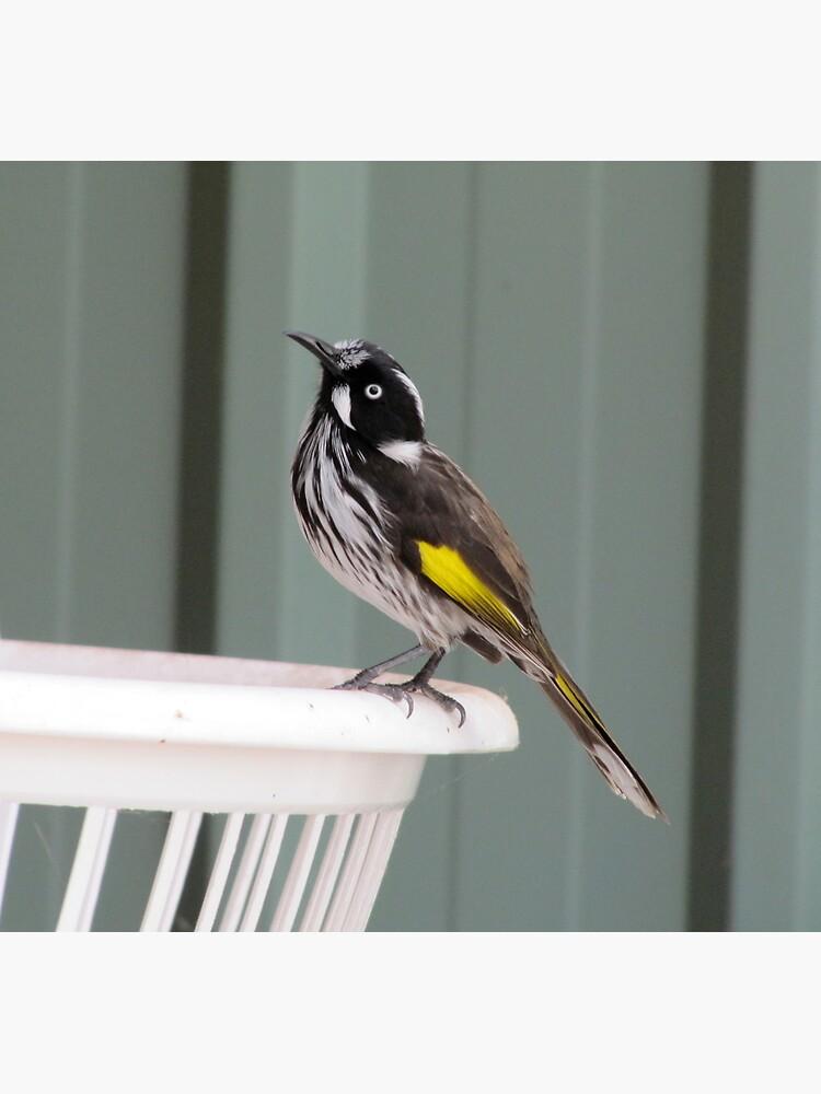 Fly Catcher by Briandamage