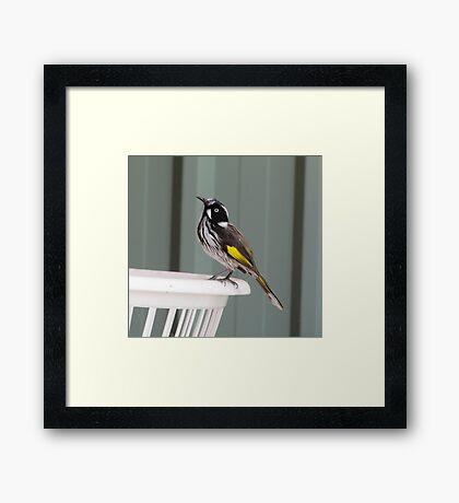 Fly Catcher Framed Print