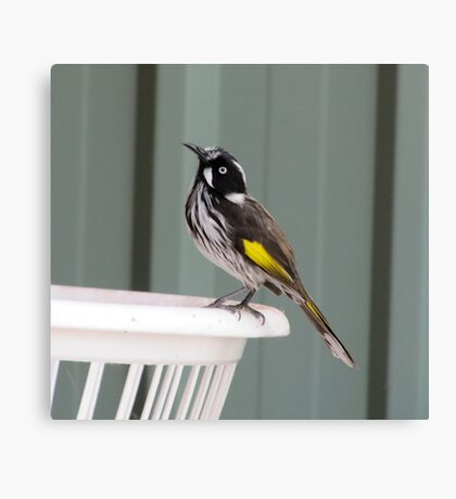 Fly Catcher Canvas Print