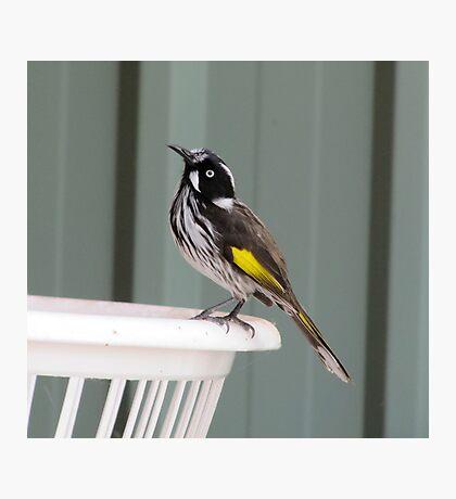 Fly Catcher Photographic Print