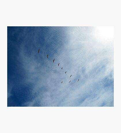 Distant Birds  Photographic Print