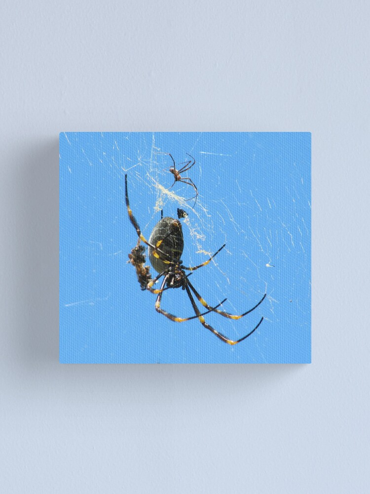 Alternate view of Balfour Spider Canvas Print