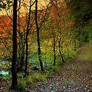 Orange October Leaves by ienemien
