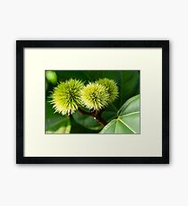 Naturally spikey Framed Print